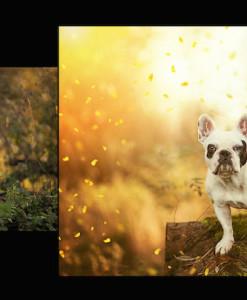 Vorschau Photoshop Set – Frühlingserwachen Gelb