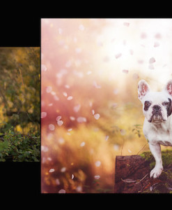 Vorschau Photoshop Set – Frühlingserwachen Rosa