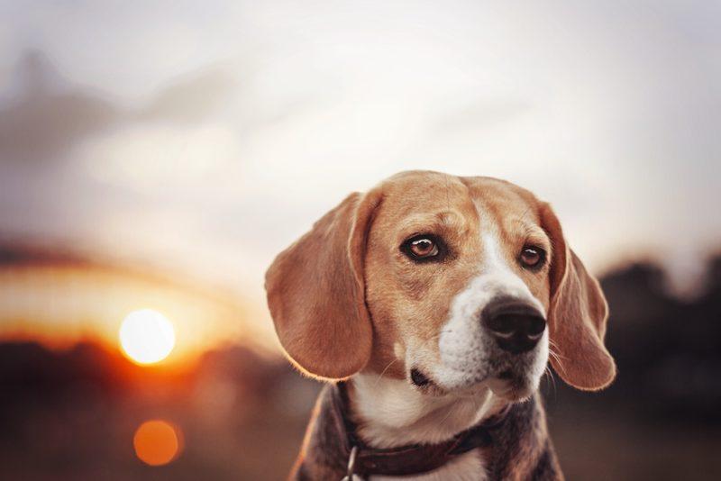 Taydoo Photoshop Set - Dog Retusche für perfekte Tierfotos - nachher-1