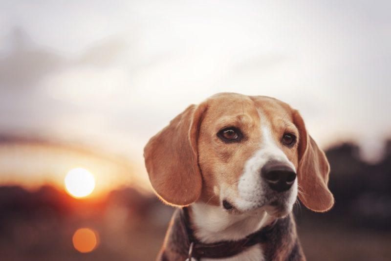 Taydoo Photoshop Set - Dog Retusche für perfekte Tierfotos - vorher-1
