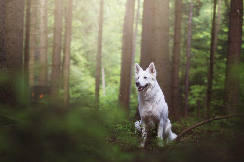 Taydoo Photoshop Set - Dog Retusche für perfekte Tierfotos - vorher-2
