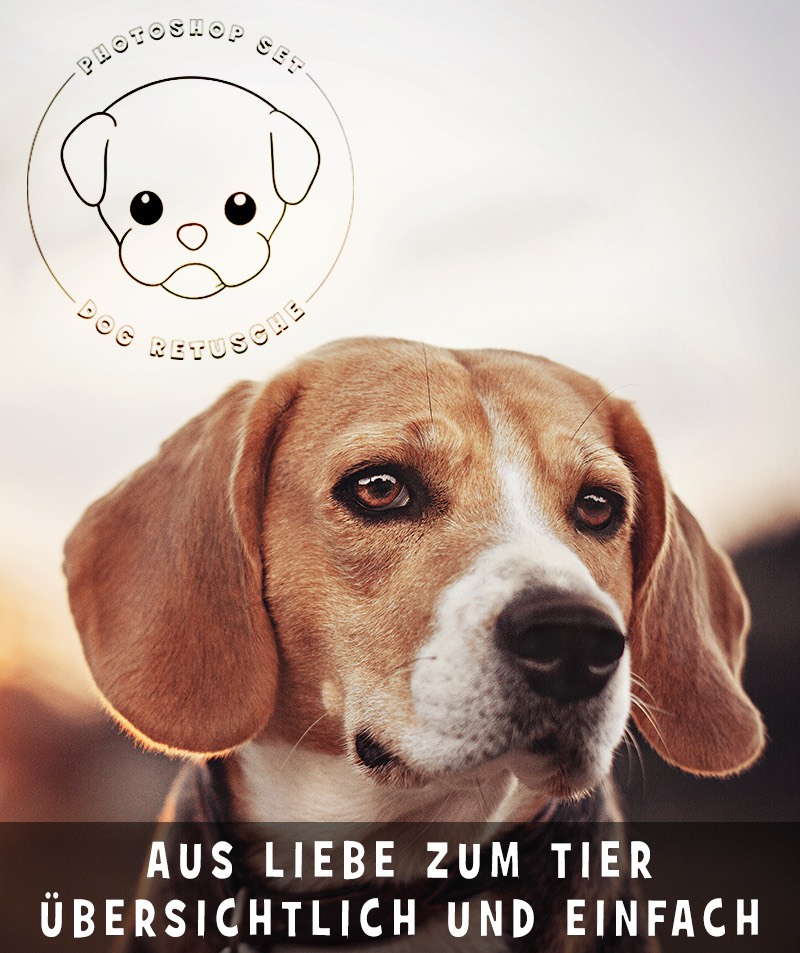 photoshop-dog-retusche-5