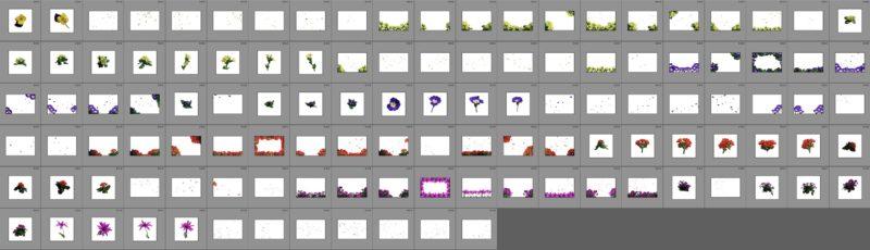 873 Blumen-Overlays für Bildbearbeitung- Taydoos Flower Power Frühling Produktbild 5
