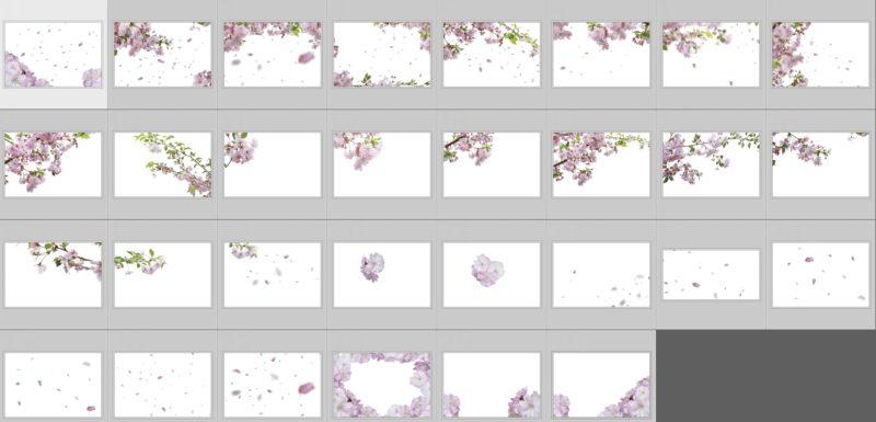 cherryflowers-collage
