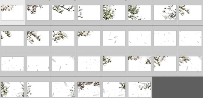 magnolia-collage