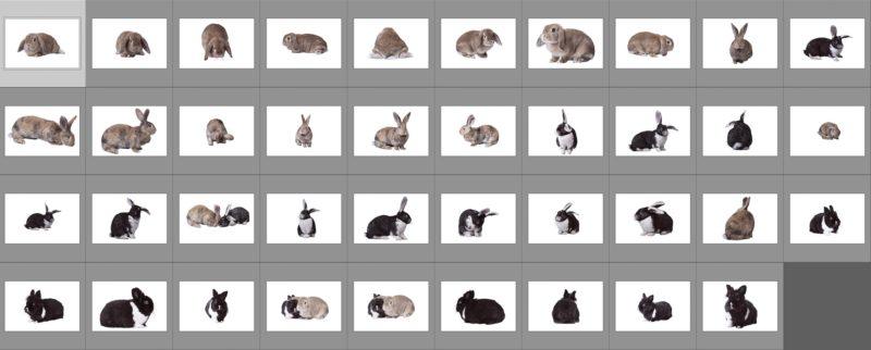 rabbit-collage