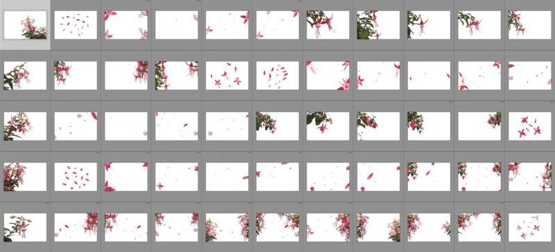fuchsia-collage