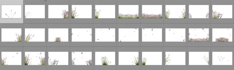 lavendel-collage