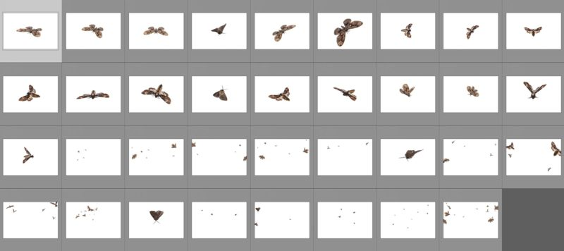 moth-collage