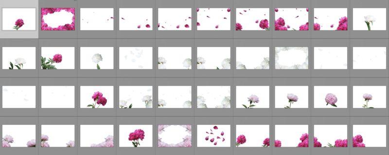 pfingstrosen-collage
