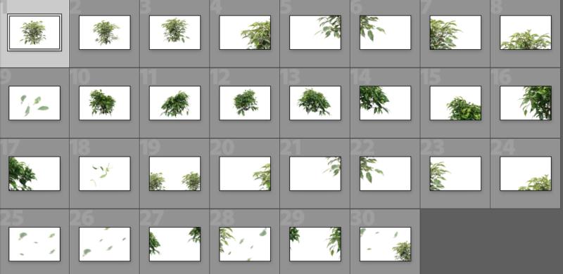 Collage Ficus