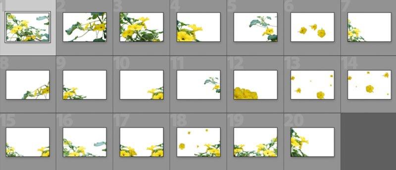 Collage Kaktusblüte
