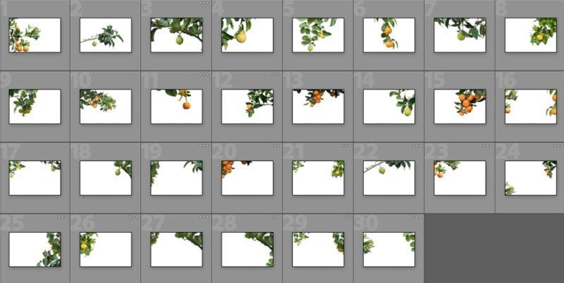 Collage Zitruspflanzen