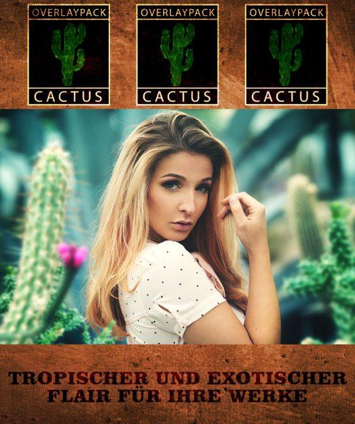 OP Hochkant Cactus 2