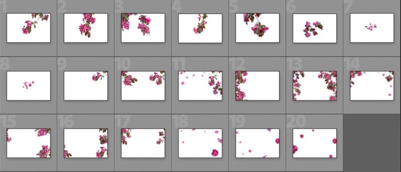 Zierkirsche-collage