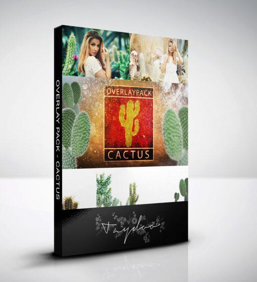 produktbox-cactus
