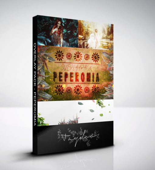 produktbox-peperomia