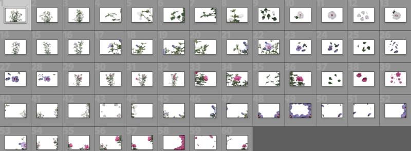 Collage Hibiskus Overlays