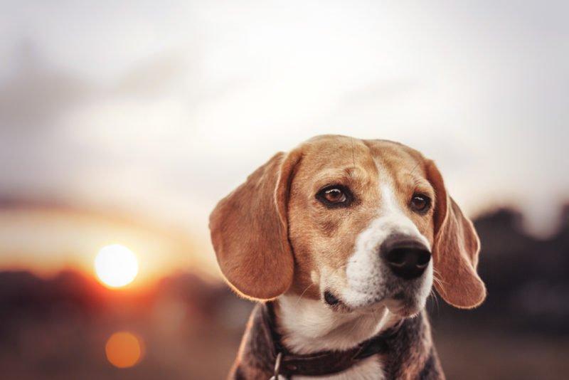 dog-retusche-lr-nachher-3