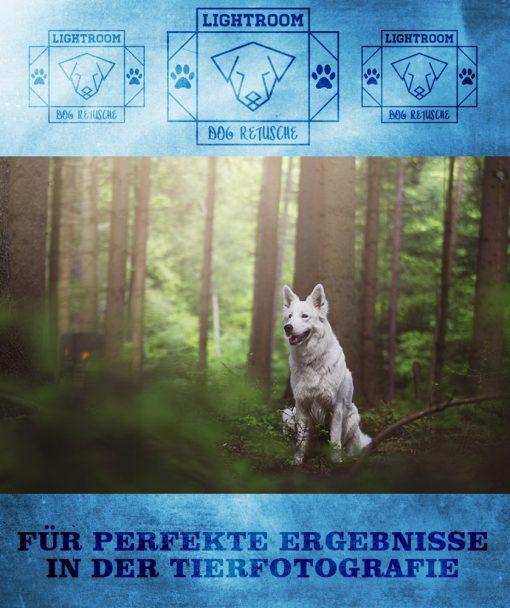 produktbild-dog-retusche-1