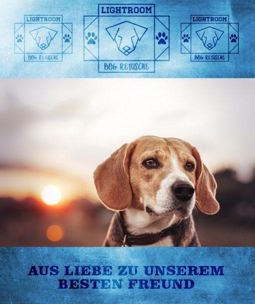 produktbild-dog-retusche-2