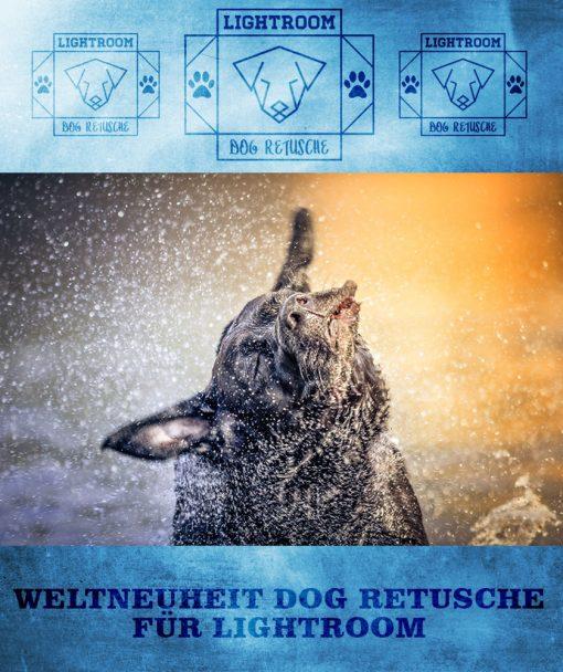 produktbild-dog-retusche-3