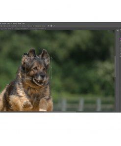 webinar-hundefotos