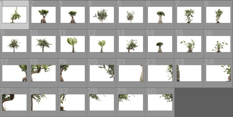 collage-baum-overlays