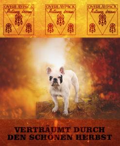 dreamcatcher-autumn-1