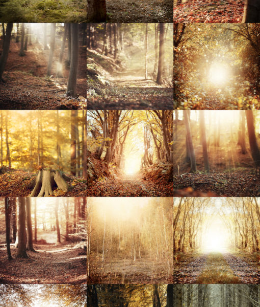 collage-herbst-backdrops-1