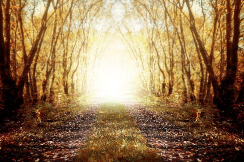 Autumn-backdrops-vorher1