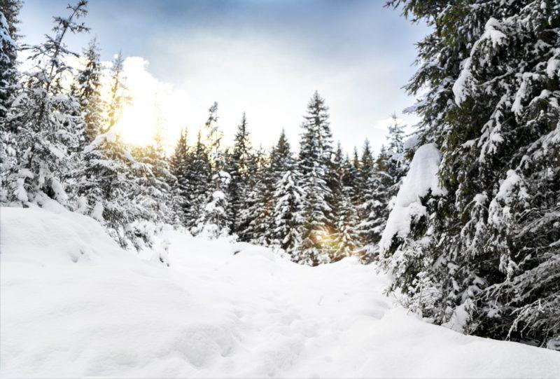 winter-wonderland-vorher2