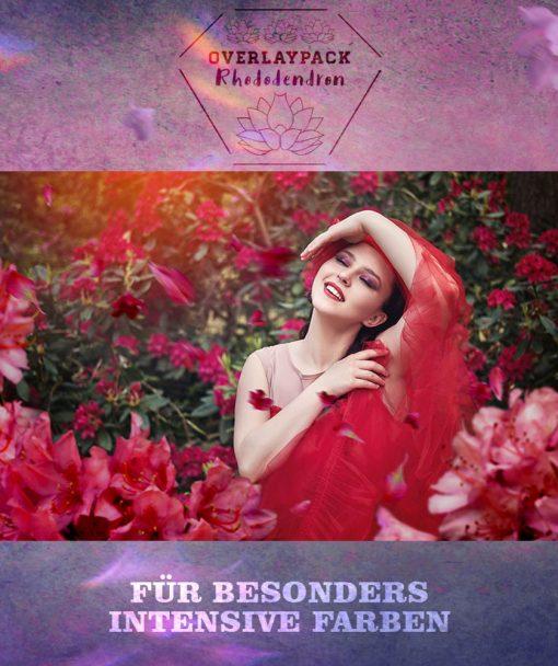 rhododendron-produktbild-2