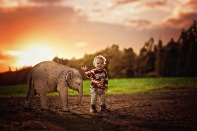 2-elefant-nachher
