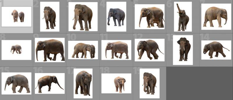 elefanten-collage