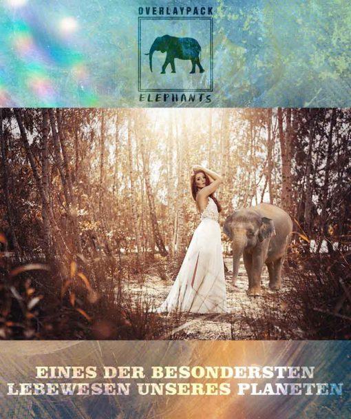 produktbild-elephants-1