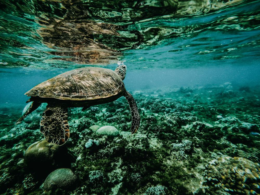 nachher-underwater-film-2