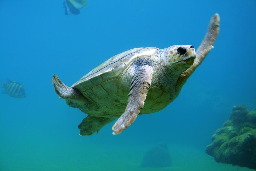 vorher-underwater-clean-3